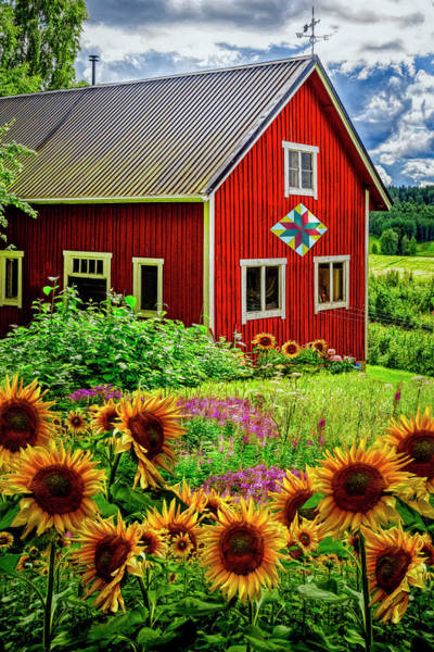 Photograph - Red Barn In Summer Sunflowers by Debra and Dave Vanderlaan