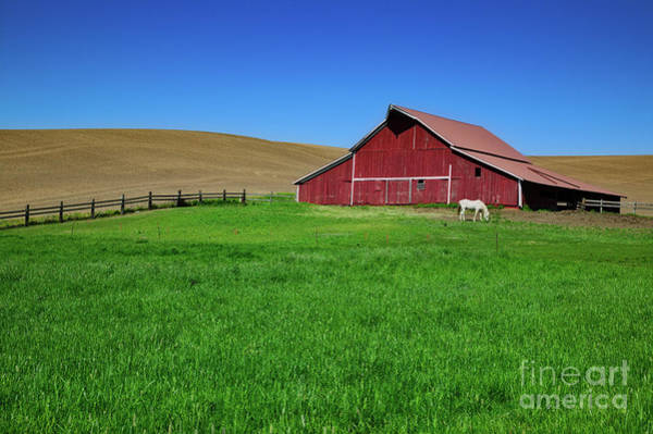 Photograph - Red Barn by Patti Schulze