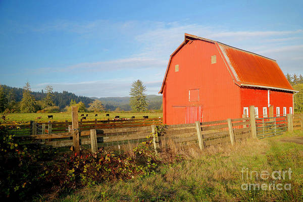 Wall Art - Photograph - Red Barn With Cows 2 by American School