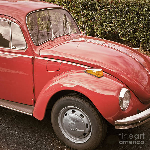 Photograph - Red Beetle by Patrick M Lynch