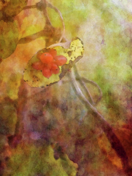 Photograph - Red Berries On The Vine 5758 Idp_2 by Steven Ward