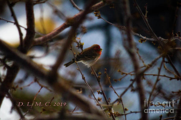 Photograph - Red Bird Has Seed by Donna L Munro