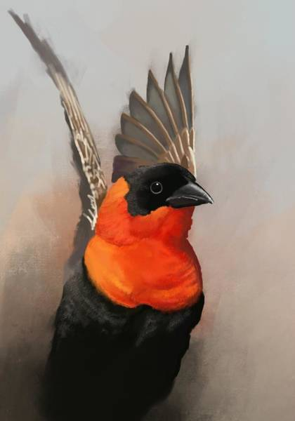 Parrot Digital Art - Red Bishop Bird by KC Gillies