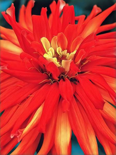 Digital Art - Red Bliss by Cindy Greenstein