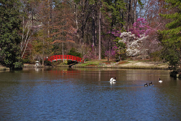 Swan Neck Photograph - Red Bridge In Japanese Garden by Red moon rise