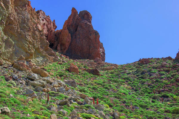 Photograph - Red Buglosses Surrounded By Red Rocks by Sun Travels