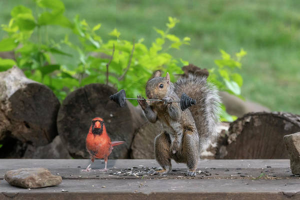 Photograph - Red Cardinal Helping Train His Buddy by Dan Friend