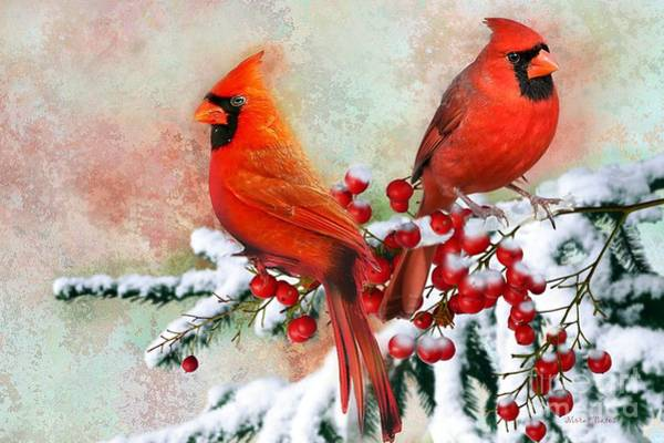 Mixed Media - Red Cardinals by Morag Bates