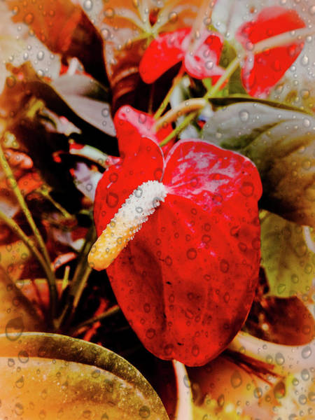 Photograph - Red Drops by AE collections