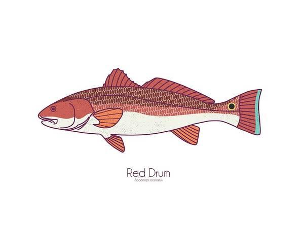 Redfish Wall Art - Digital Art - Red Drum Redfish by Kevin Putman