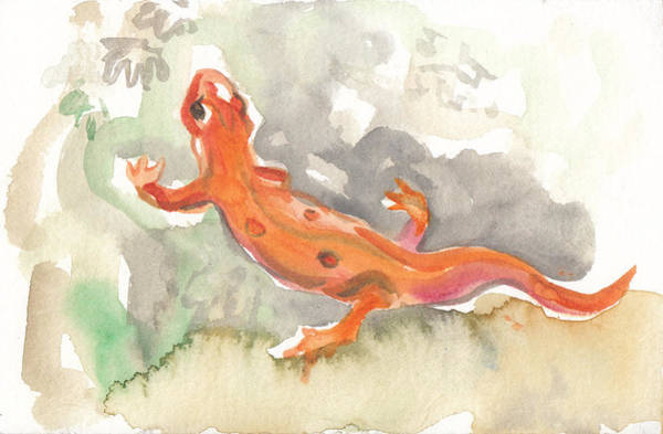 Red Eft Art Print