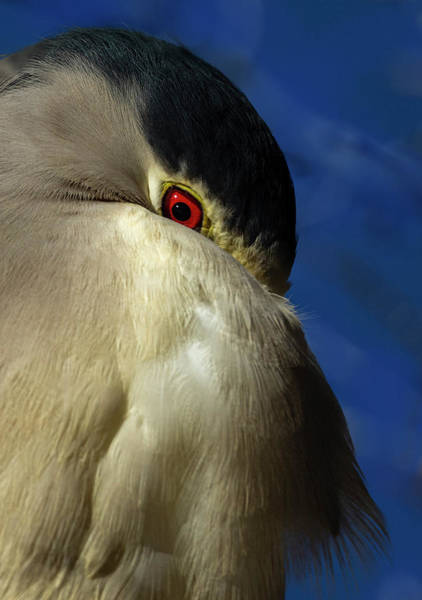 Photograph - Red Eye by Rick Mosher