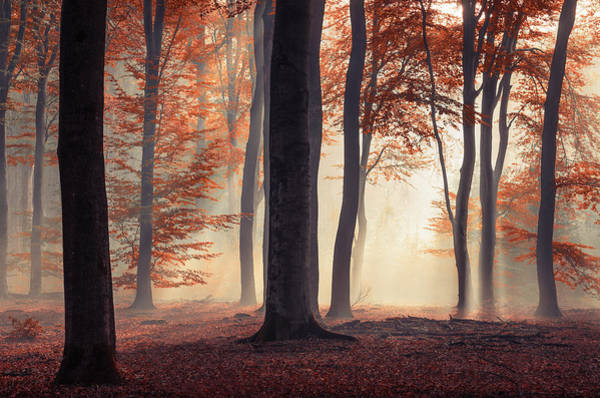 Photograph - Red Fairytale Autumn Forest by Rob Visser