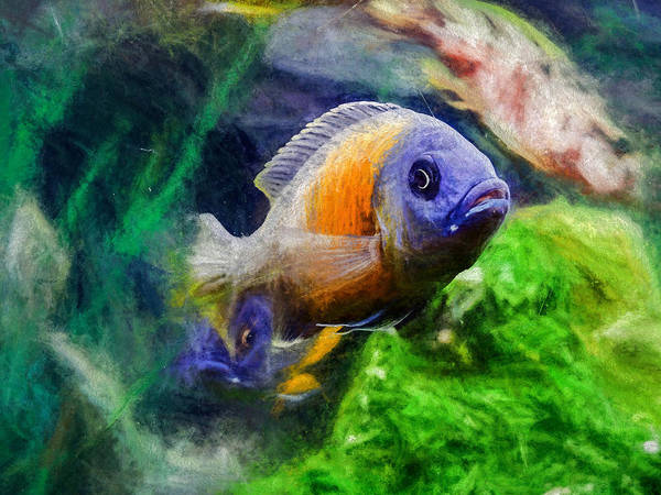 Digital Art - Red Fin Borleyi Cichlid by Don Northup