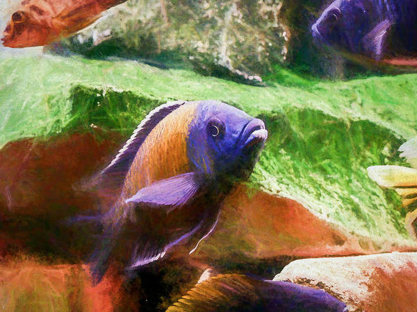 Digital Art - Red Fin Borleyi Cichlid Rising by Don Northup
