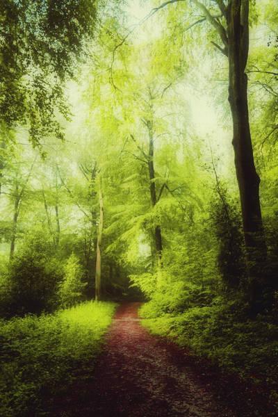 Photograph - Red Forest Walk by Dirk Wuestenhagen