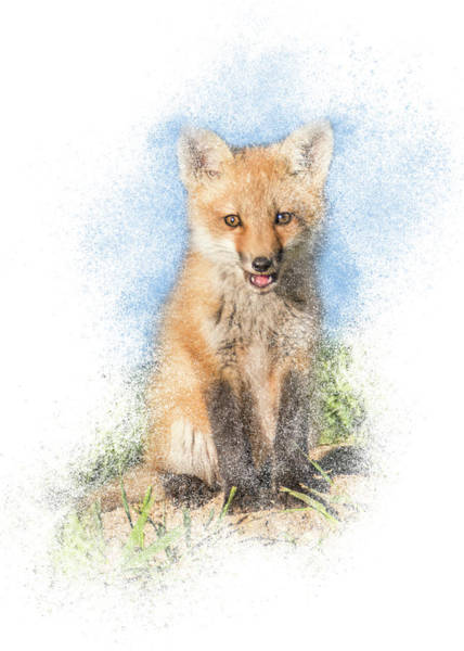 Photograph - Red Fox Kit #1 - Sitting Tall by Patti Deters