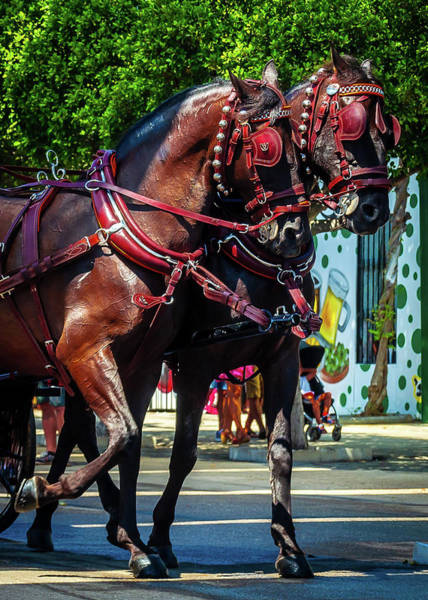 Photograph - Red Harnesses Horses by Borja Robles