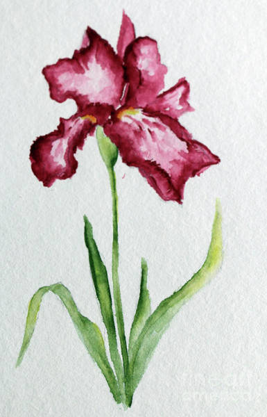 Painting - Red Iris by Christiane Schulze Art And Photography