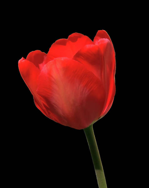 Photograph - Red Is Wonderful by Johanna Hurmerinta