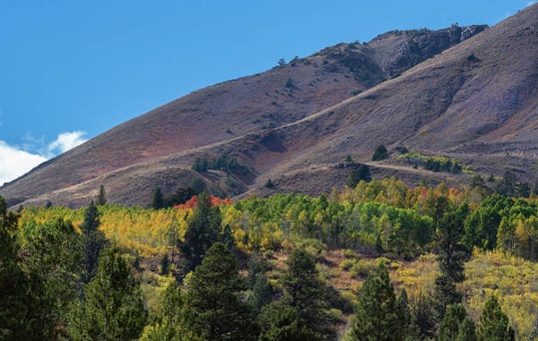 Photograph - Red Lake Peak by Jonathan Hansen