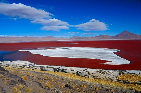 Bolivia Photograph - Red Lake by Werner Büchel