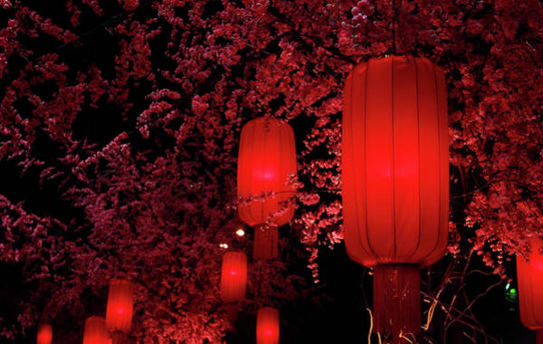 Chinese New Year Photograph - Red Lanterns by Orchidpoet
