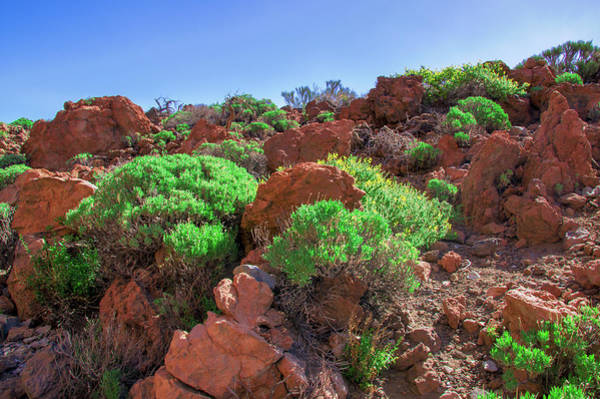 Photograph - Red Lava Stones In The Teide National Park by Sun Travels