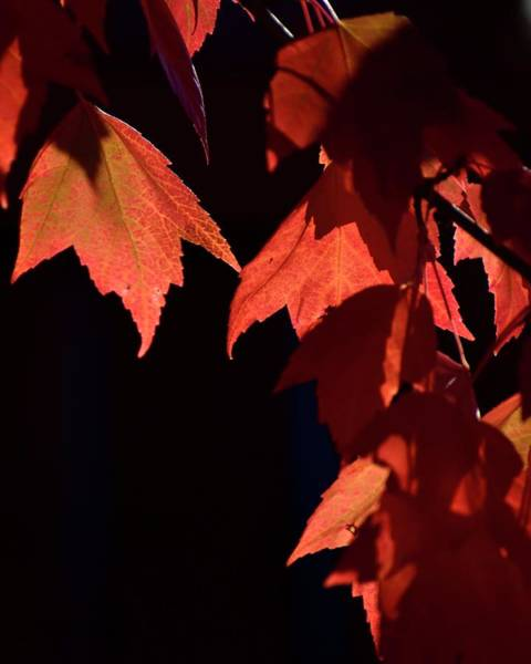 Photograph - Red Leaf Grouping by Jerry Sodorff