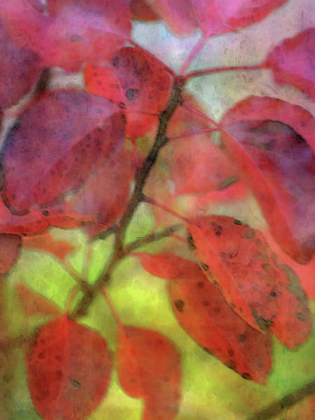 Photograph - Red Leaves 0122 Idp_2 by Steven Ward
