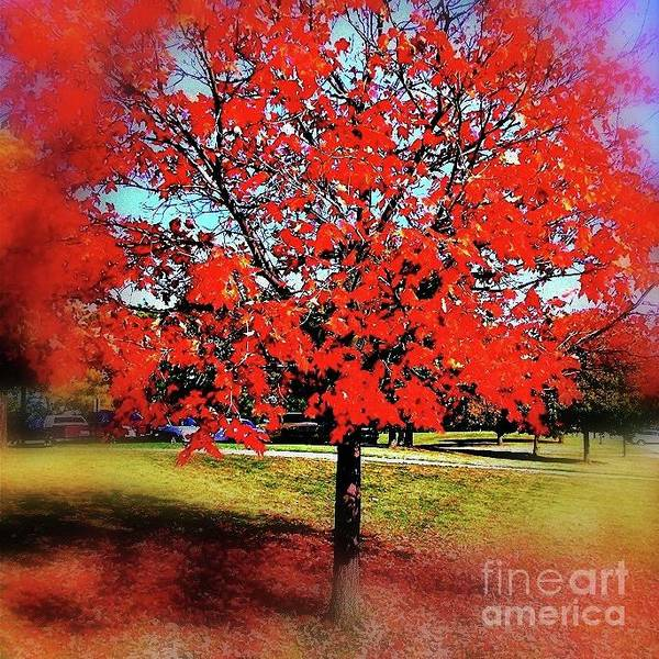 Photograph - Red Leaves And Shadows by Frank J Casella