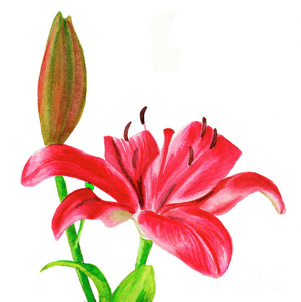 Wall Art - Painting - Red Lily With Bud Square Design by Sharon Freeman