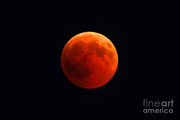 Photograph - Red Lunar Eclipse by Benny Marty