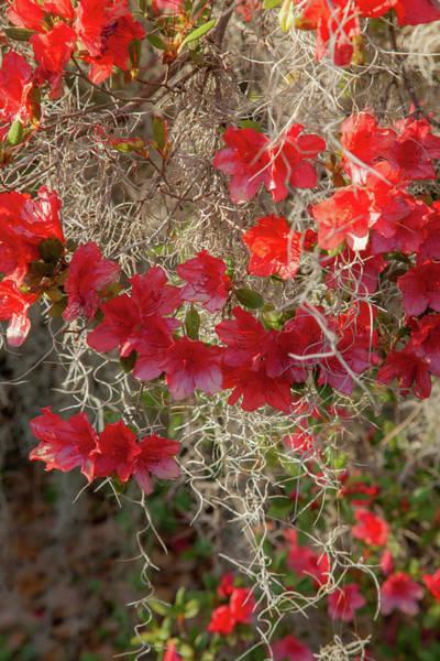 Wall Art - Photograph - Red Moss by Iris Greenwell
