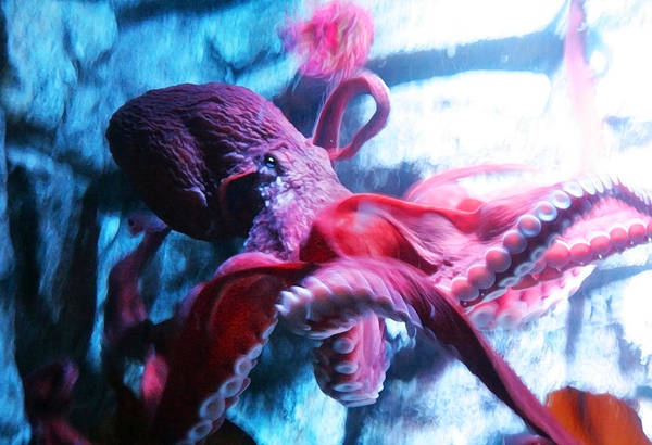Digital Art - Red Octopus by Anthony Jones