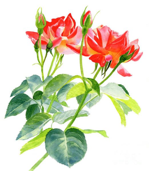 Wall Art - Painting - Red Orange Rose Blossoms With Buds by Sharon Freeman