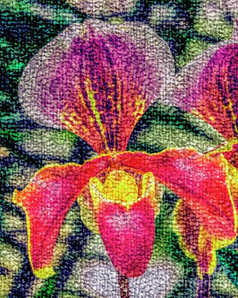Photograph - Red Orchid by Nigel Dudson