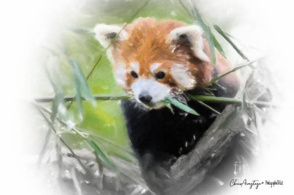 Painting - Red Panda by Chris Armytage