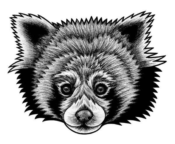 Zoo Animals Drawing - Red Panda - Ink Illustration by Loren Dowding