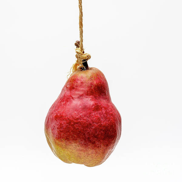 Wall Art - Photograph - Red Pear On A White Background by Bernard Jaubert