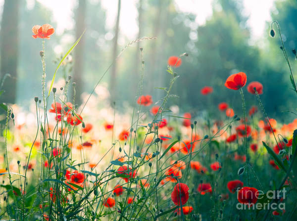 Wall Art - Photograph - Red Poppies In The Forest At Morning by Hofhauser