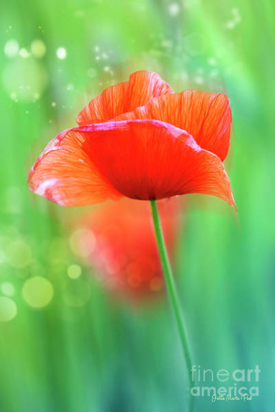 Photograph - Red Poppy by Jutta Maria Pusl