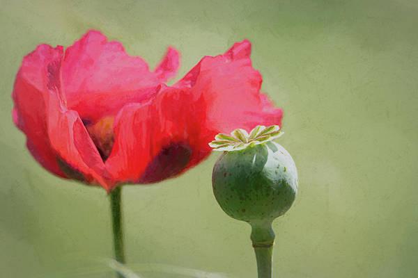 Wall Art - Digital Art - Red Poppy New Beginnings by Debra Martz