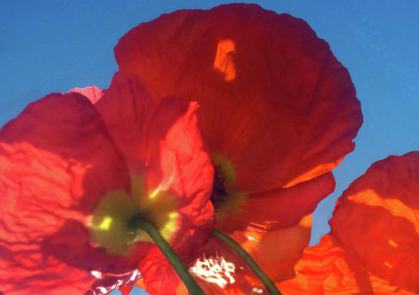 Wall Art - Photograph - Red Poppy Sky by Jaeda DeWalt