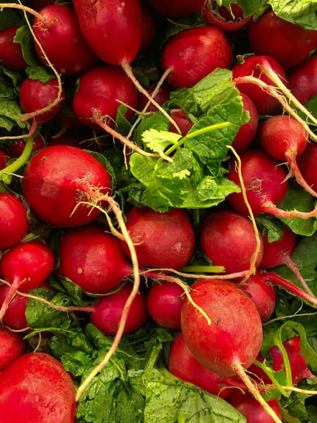 Photograph - Red Radishes by Nathan Little