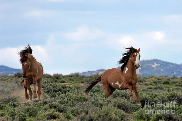 Photograph - Red Raiders by Jim Garrison
