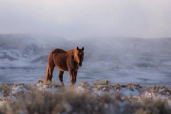 Wall Art - Photograph - Red Rocker In Winter by Sandy Sisti