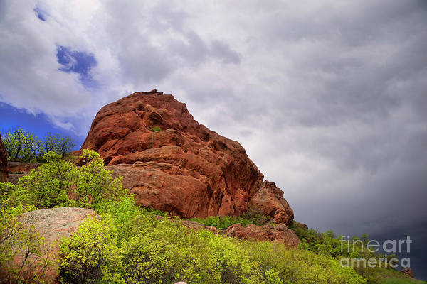 Photograph - Red Rocks In Spring by Barbara Schultheis