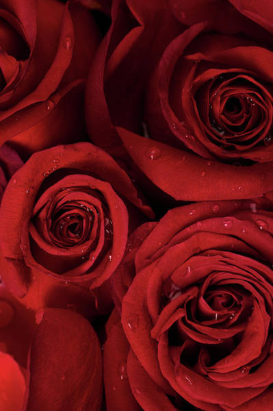 Wedding Bouquet Photograph - Red Roses, Dew Drops, Flower, Valentine by 1photodiva