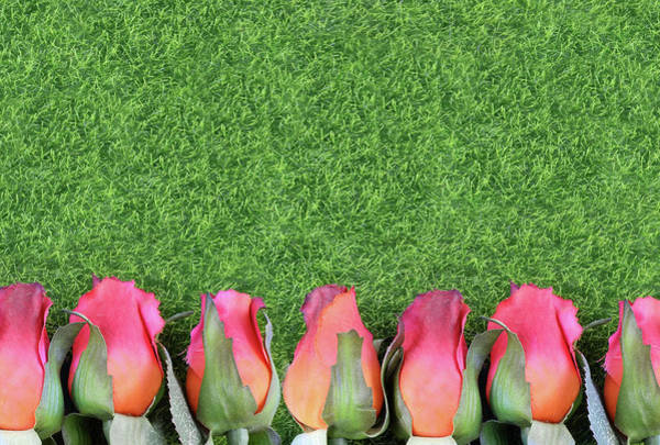 Photograph - Red Silk Roses And Artificial Green Grass Form A Bottom Border. Good For The Running Of The Thoroughbred Race Called The Kentucky Derby. Copy Space by Perry Correll